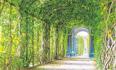 Der Laubengang ist seit der Renaissance beliebtes Gestaltungselement in Gärten. Auch wenn nicht jeder Garten groß genug für ein ausladendes Modell ist, auch kleine Pergolen spenden Schatten. Foto dziewul - stock.adobe.com: