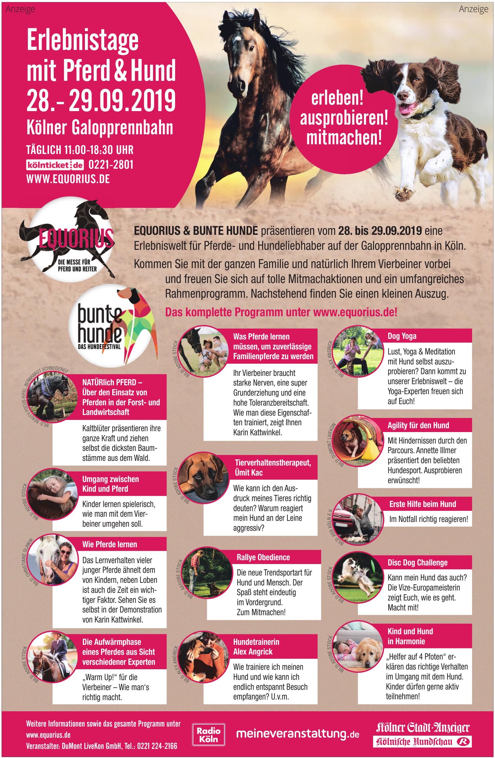 Erlebnistage mit Pferd & Hund