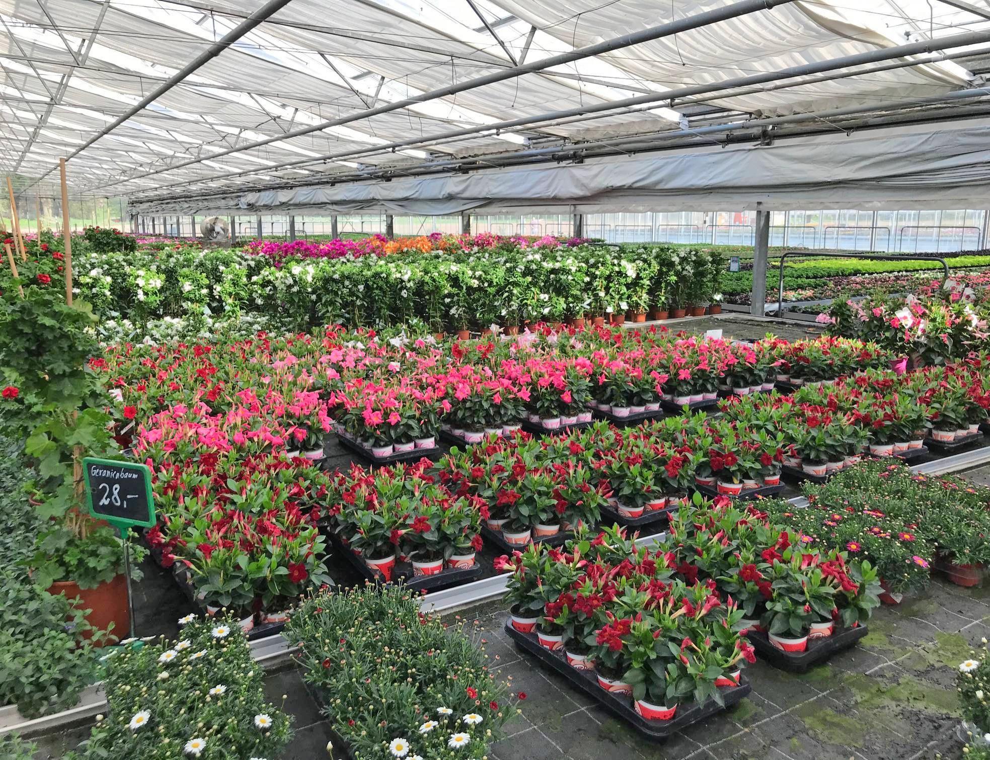 Bei Essinger und Lang werden Pflanzen in den eigenen Gewächshäusern und im Freiland gezogen. Zu jeder Jahreszeit gibt es eine große Auswahl. Foto: privat