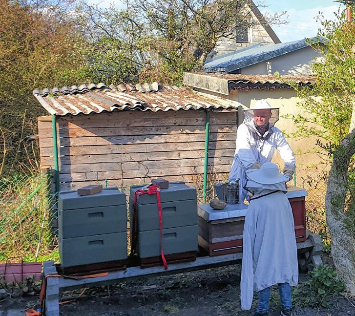 Vier Bienenbeuten betreut Ketelsen in seinem Kleingarten. Foto/Grafik: gettyImages/stockfotocz;Ali Aliyev