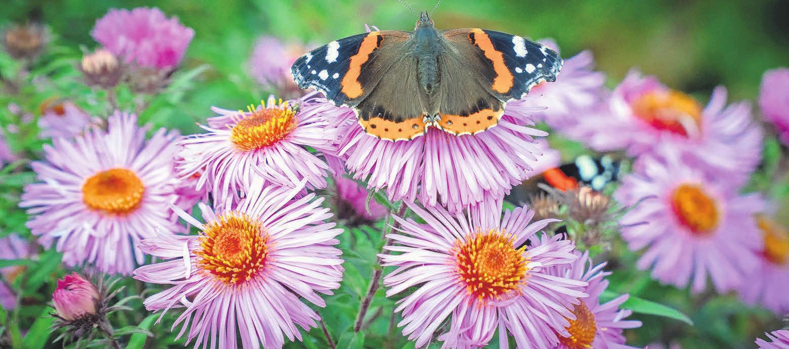 Ob Balkon oder Terrasse: Insektenfreundliche Blühpflanzen sind im Trend.