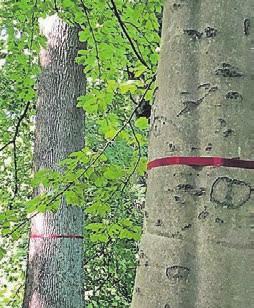 Rote Bänder markieren die Bäume, bei denen die Menschen ihre letzte Ruhe finden können.