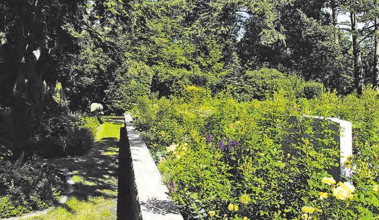 Pflegefreie Grabstätten im neu angelegten Rosengarten in Reinbek Foto: A. Habel
