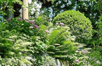 Garten im Sommer - Hipolstein