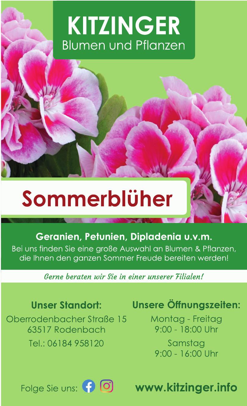 Kitzinger Blumen und Pflanzen