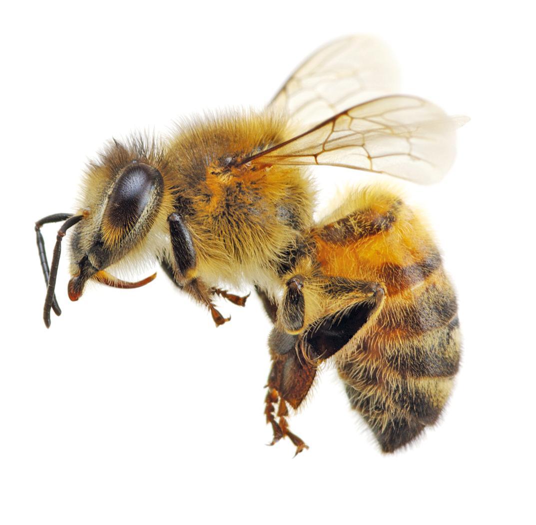 Ein Paradies für fleissige Bienen Image 1