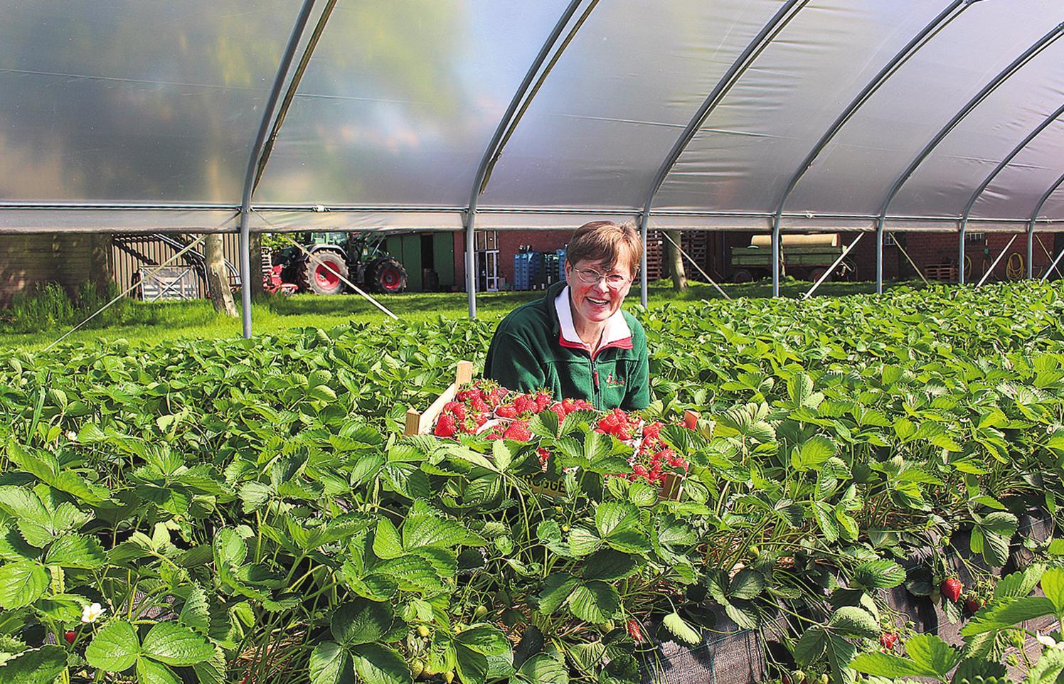 Heike Brüggenwirth freut sich über die verlängerte Saison für die prallen roten Vitaminbomben. FOTO: AR