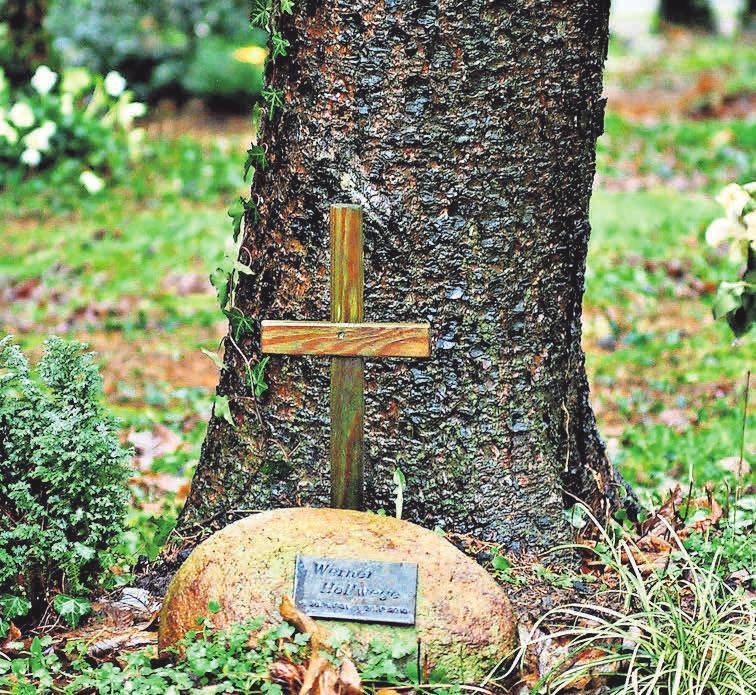 Bei einer Baumbestattung wird die Urne am Fuße der Pflanze beigesetzt. Foto: Pixabay