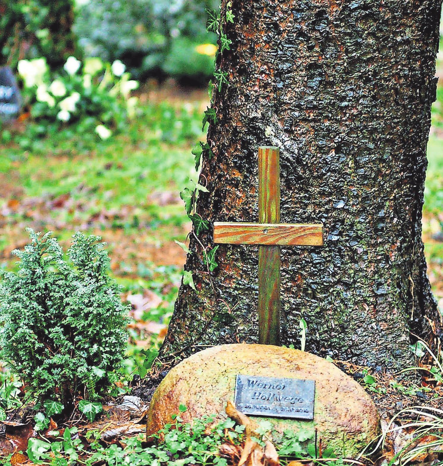Bei einer Baumbestattung steht die Urne am Fuße der Pflanze. Foto: Pixabay