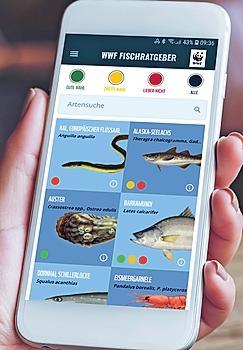 Den Fischratgeber mit einfachem Ampelsystem gibt es auch als App. FOTO: DJD/WWW.WWF.DE