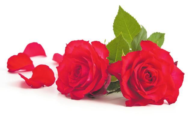 Blühendes zum Valentinstag? Im Fachhandel gibt es hervorragende Gärtnerqualität, die nicht nur gut aussieht, sondern auch besonders ist. Text und Foto: GMH/BVE