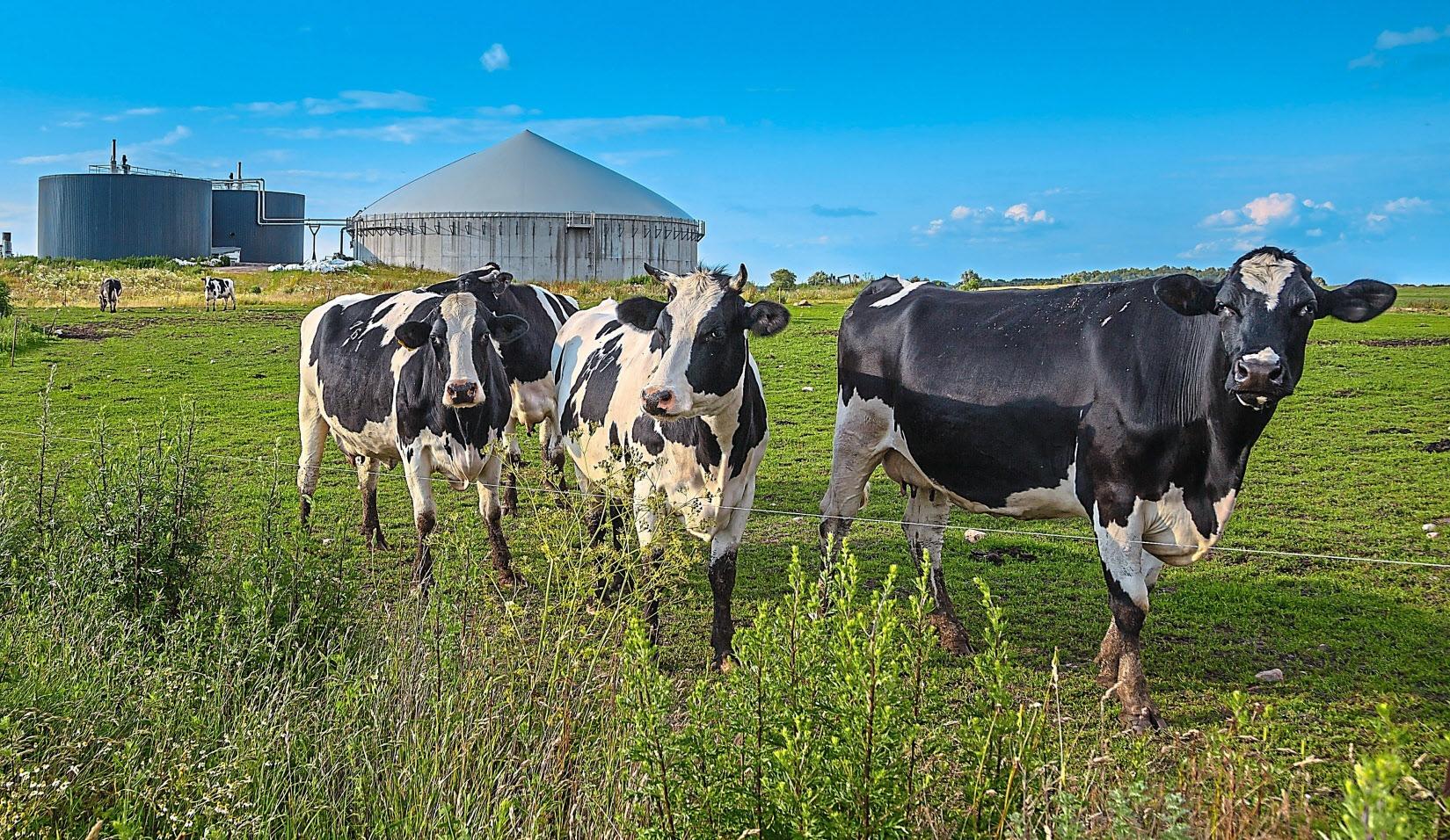Die Synergien aus Tierhaltung, Pflanzenproduktion und Energiegewinnung werden in der Landwirtschaft schon seit Jahren genutzt. Neue Technologien machen sie noch wirksamer. Foto: Getty Images