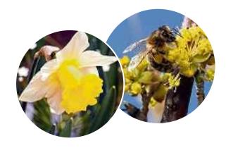 Die Lutherstadt begrüßt das Frühjahr Image 3