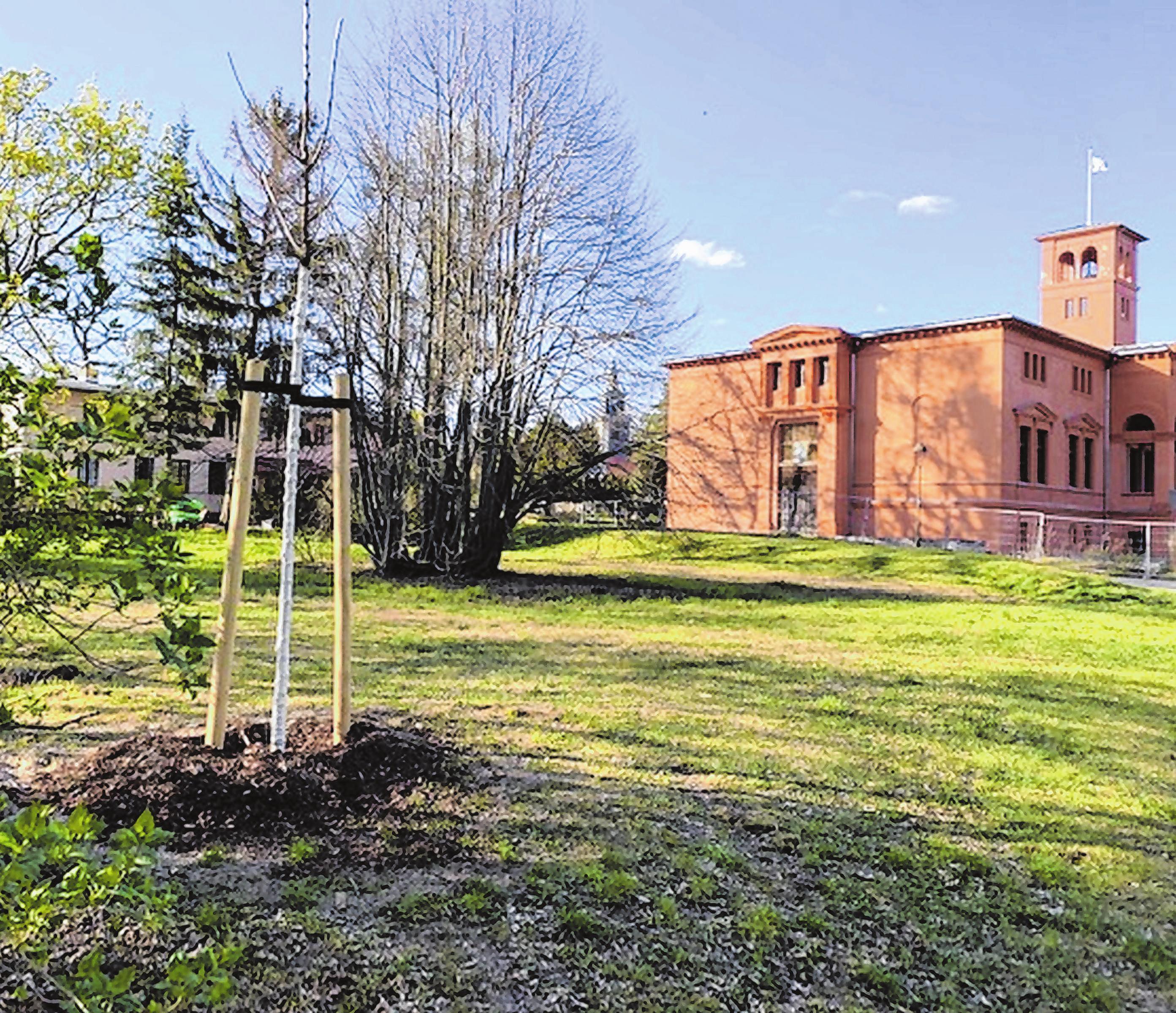 Baumnachpflanzungen im Park der Turm-Villa in Dahlwitz-Hoppegarten Foto: Firma Kracht Gala Bau GmbH
