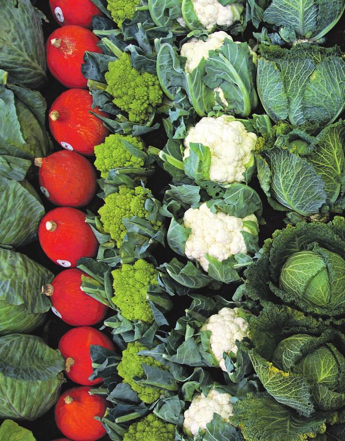 Vor allem mit Kohl-Sorten, die wir auf unseren Wochenmärkten finden, können wir im Winter Vitamine aufnehmen Foto: pixabay