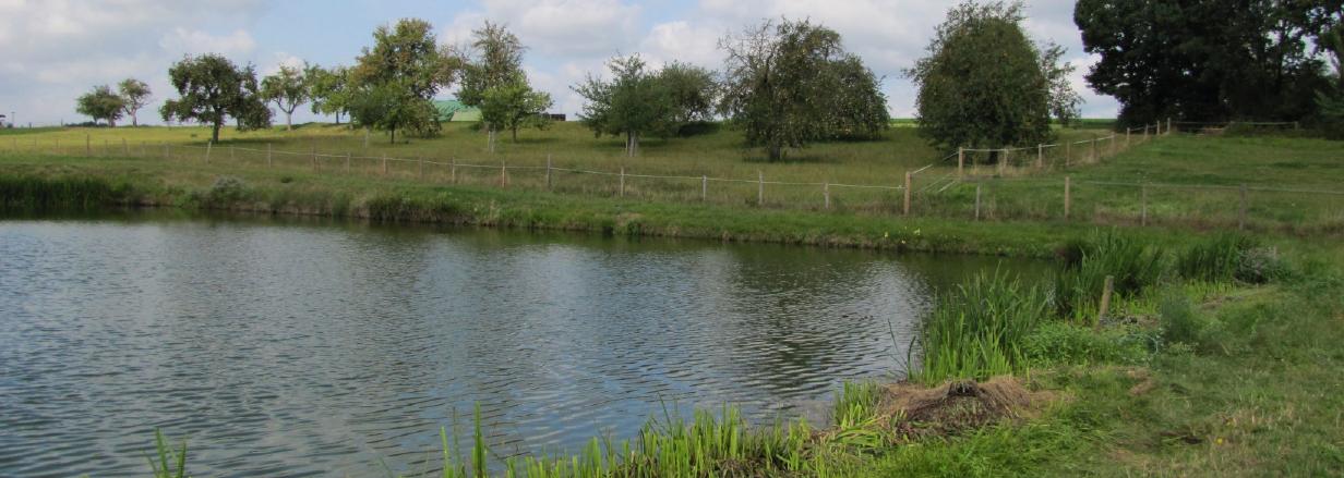 Saubere Gewässer sind die Grundvoraussetzung für frischen und Gesunden Fisch.