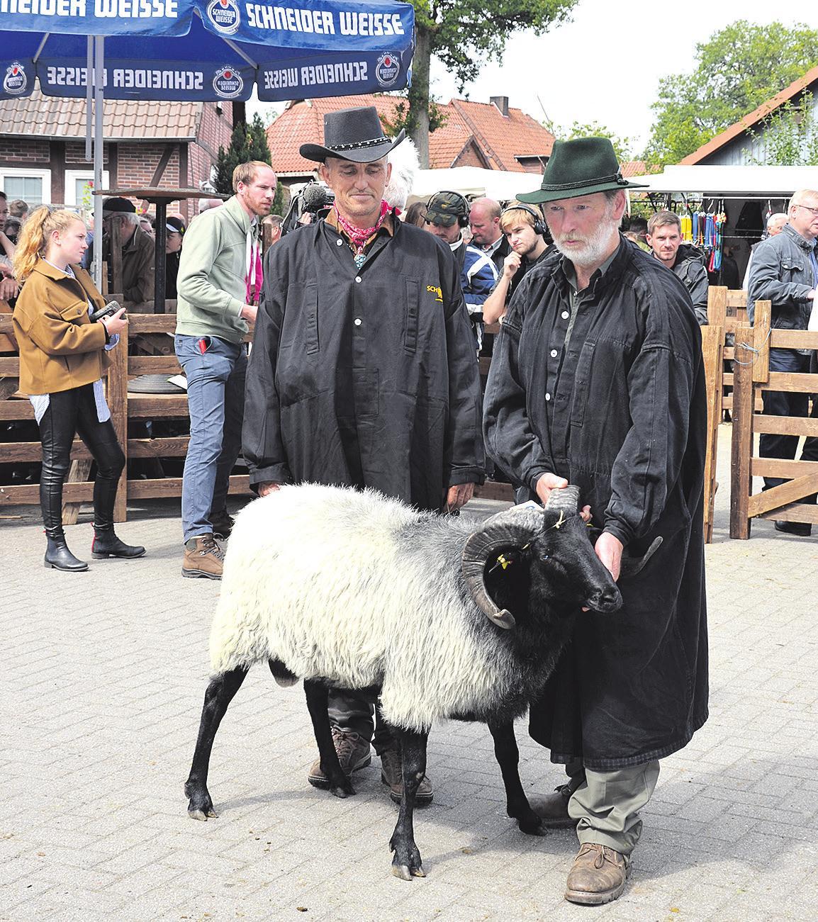 Der zum schönsten Bock gekürte Mister Müden 2019 kommt vom Verein Schäferhof aus Neuenkirchen. Foto: Alexiou