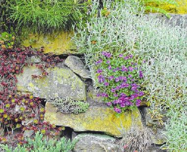 Trockenmauern leisten einen ökologischen Beitrag.