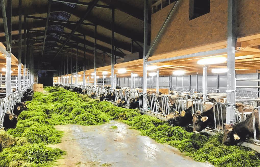 Für eine professionelle Rinderhaltung hat Alexander Eisenmann vom Hofgut Ratzenberg einen neuen Bio-Mutterkuhstall bauen lassen.
