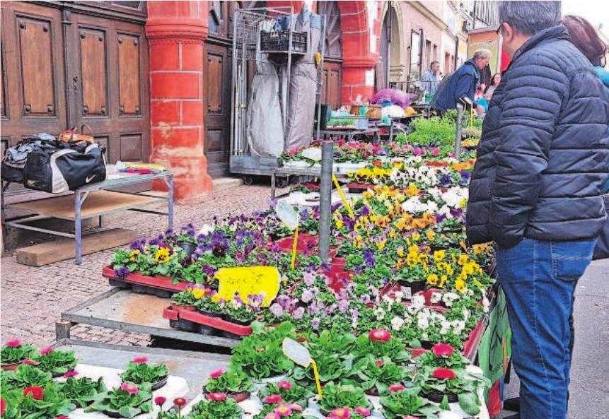 Ein Hauch von Frühling ist beim Schlendern entlang der zahlreichen Marktstände in Ebern zu spüren. Fotos: A. Altmann