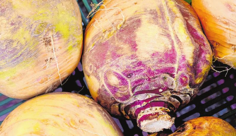 Roh schmecken Steckrüben ähnlich wie Kohlrabi. FOTO: HOLGER HOLLEMANN, MAG