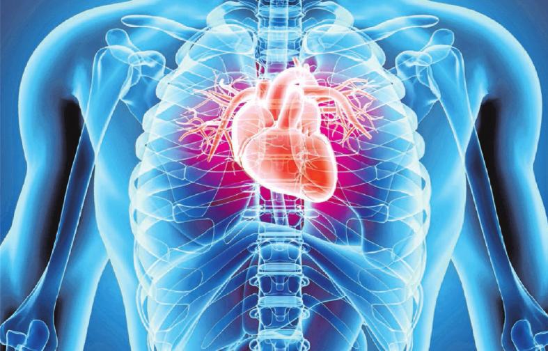 Eine gesunde Lebensführung ist gut für das Herz.