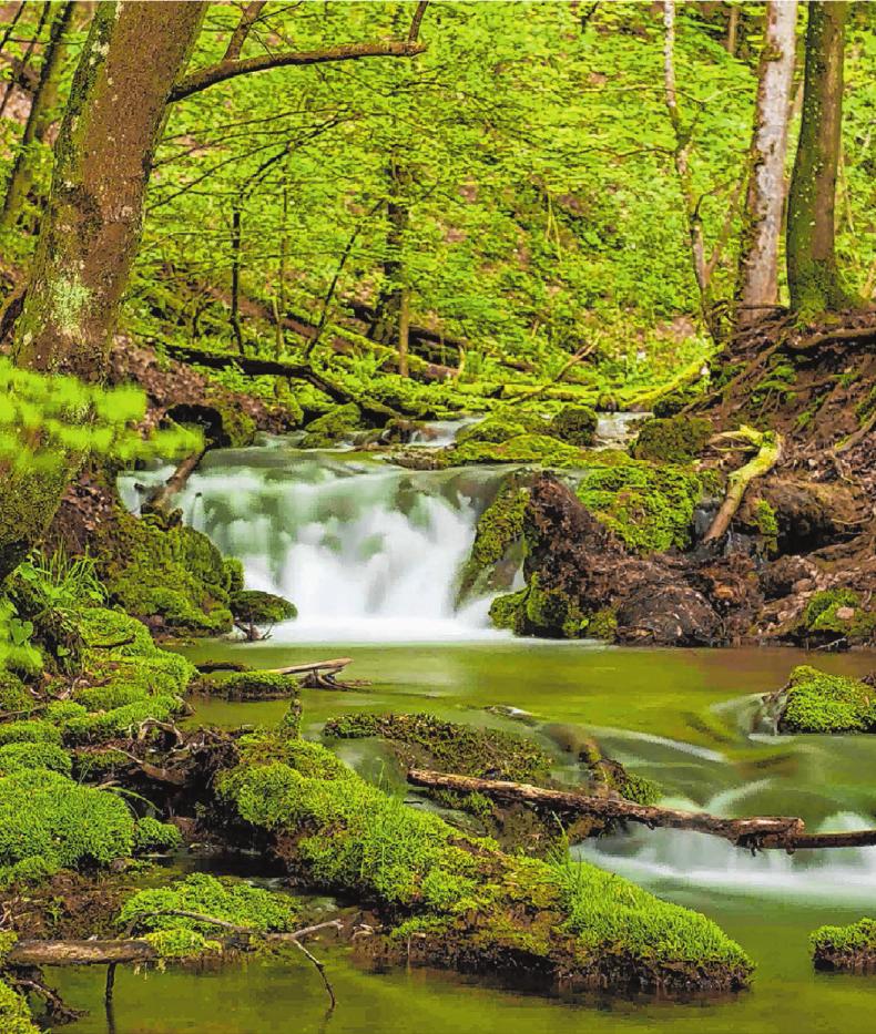 Auch wer die Natur sucht, ist im Land richtig: hier frisches Grün unterhalb des Bad Uracher Wasserfalls.