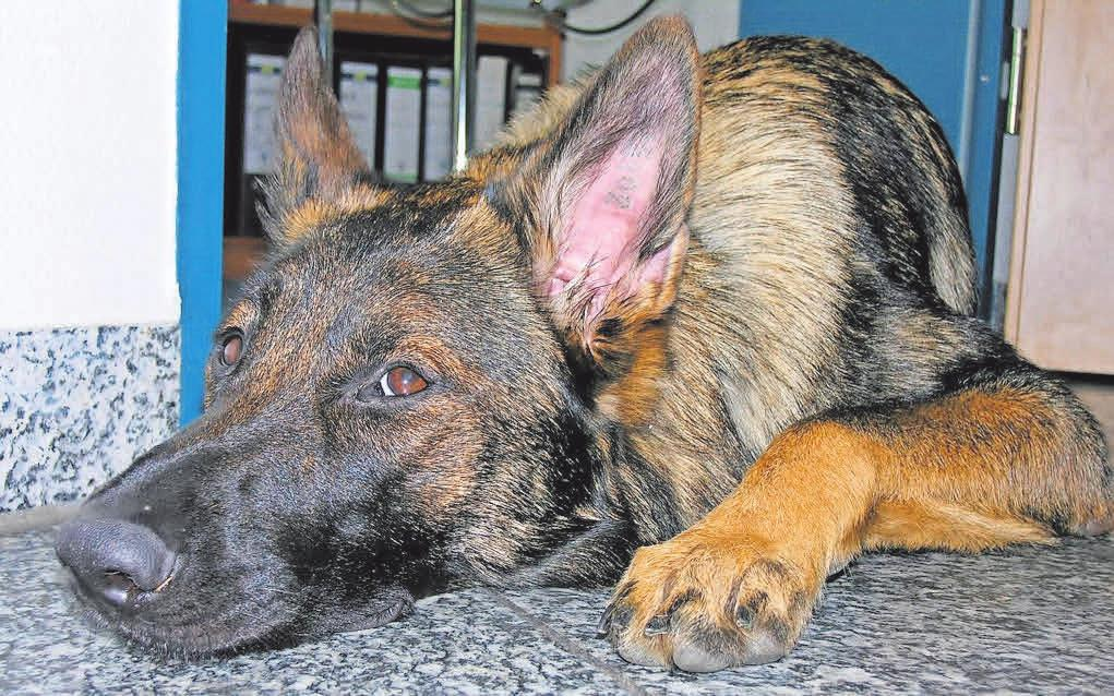 Haustiere können der Einrichtung ganz schön zusetzen. Gut, wenn ein widerstandsfähiger Fliesenbelag den Boden unempfindlich macht.