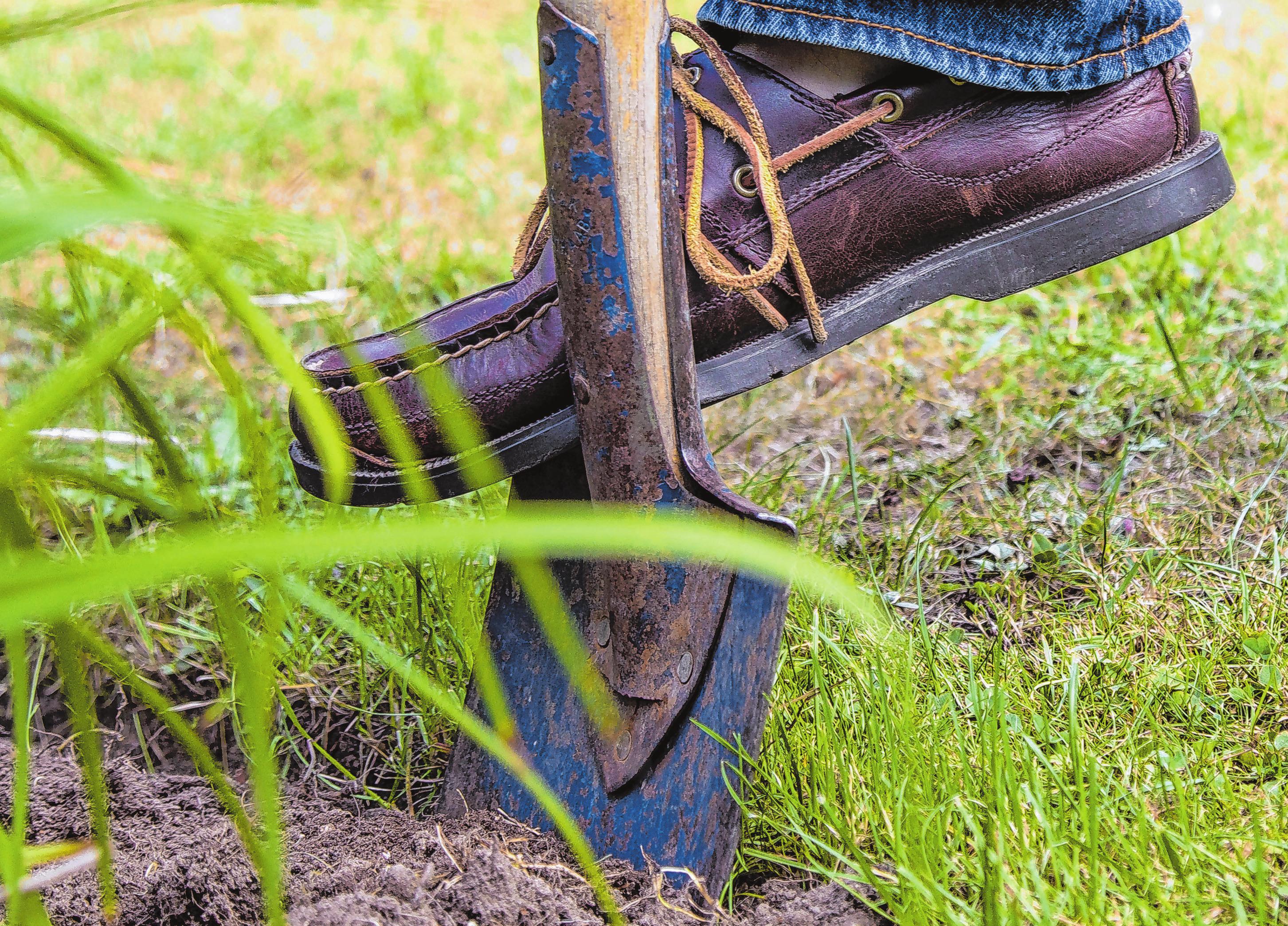 Um eine aussagekräftige Bodenprobe zu entnehmen, sollte man an mehreren Stellen etwas Erdreich mit dem Spaten ausheben. Foto: Christin Klose/dpa-mag