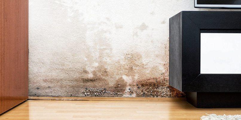 Soweit sollte man es gar nicht kommen lassen – Schimmelbildung kann Schäden an Gesundheit und Bausubstanz verursachen. Bild: wabeno/stock.adobe.com