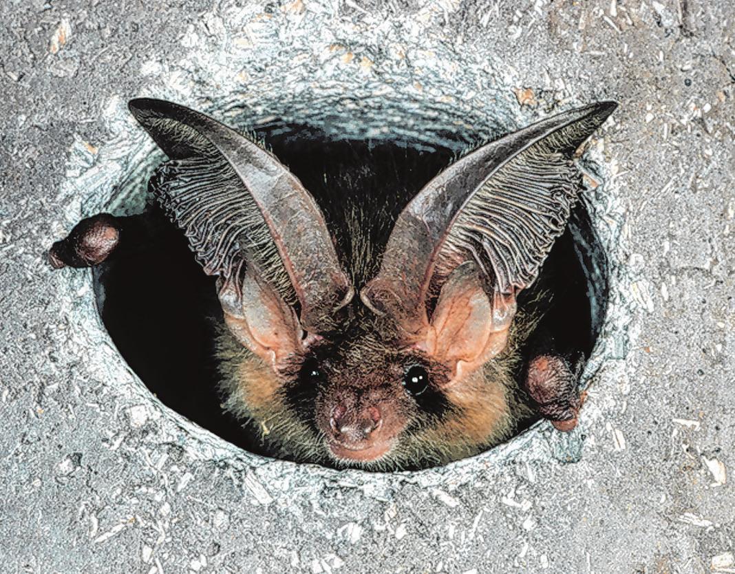 Fledermäuse auf Wohnungssuche Image 1