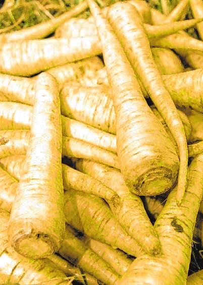 Wurzelpetersilie sorgt in Suppen oder in Kartoffelpürees für einen intensiven Geschmack. BILD: ANDREA WARNECKE/DPA-TMN