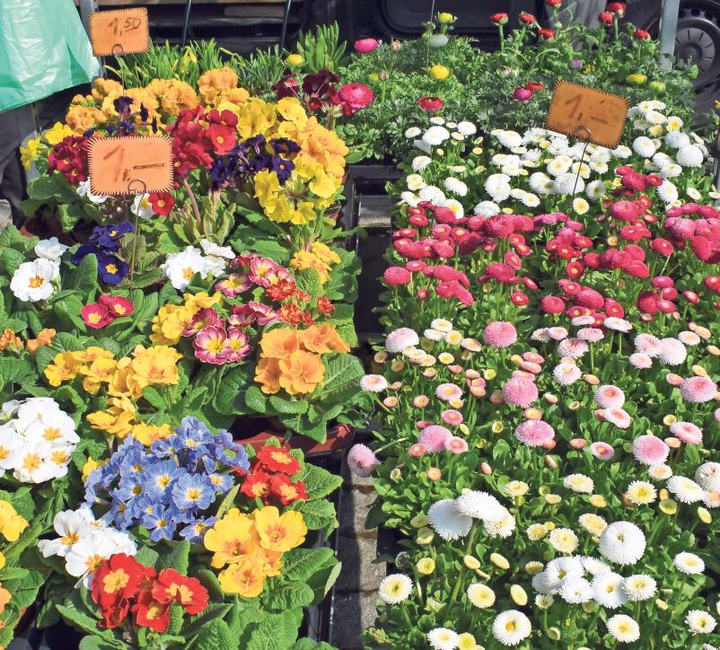 Die ersten bunten Farbtupfer für Balkon, Terrasse und Wohnzimmer gibt es auf dem Palmarkt in Hollfeld in großer Auswahl.