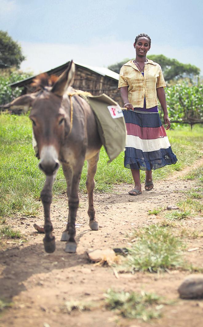 """BILDUNGLesen und Schreiben sind der Schlüssel zu einem besseren Leben. Die """"Esel-Bibliothek"""" hilft dabei. Birtukan Chebuds Langohr und weitere Tiere tragen regelmäßig Hunderte Bücher zu Kindern in äthiopischen Dörfern."""