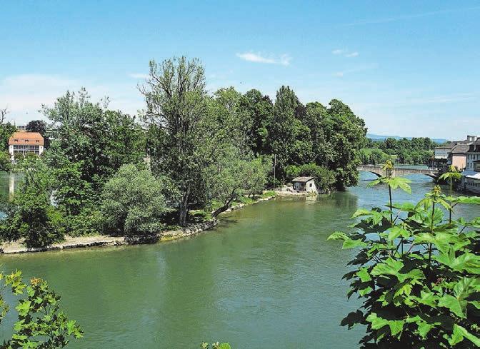 Das Rheinfelder «Inseli», eine beliebte Parkanlage und ein begehrter Badeplatz.