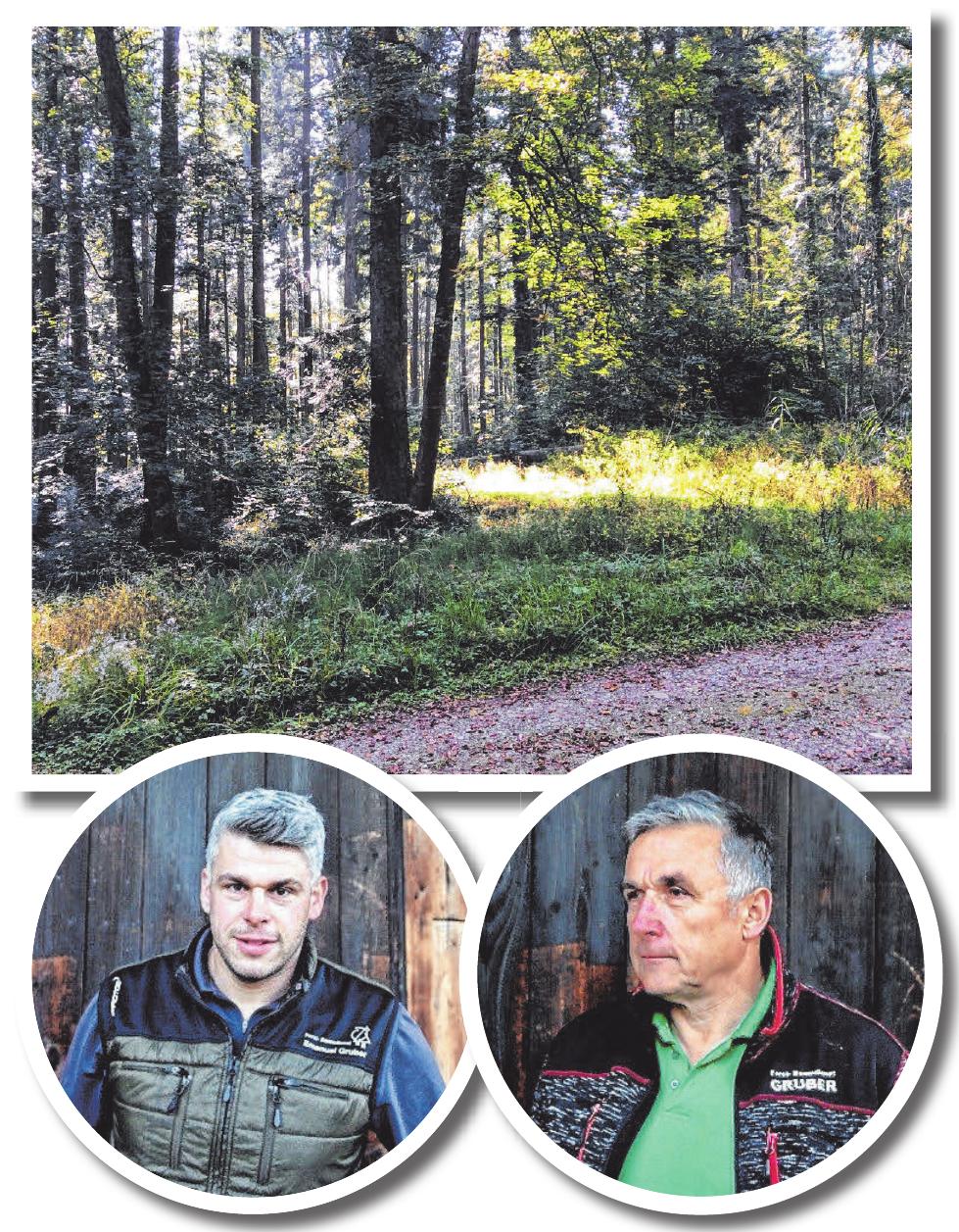 Im Einsatz für Wald und Holz Image 1