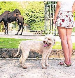 An der kurzen Leine gehalten dürfen Hunde mit in den Zoo.