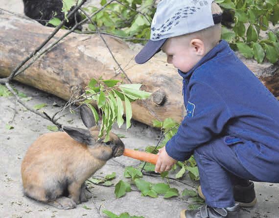 IM STREICHELGEHEGE: Hier genießen vor allem die Jüngsten die Begegnung mit den Tieren. © Filmtier-Park Eschede