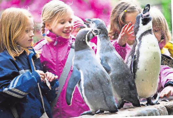 Pinguine hautnah erleben: Die Mitmachfütterung.