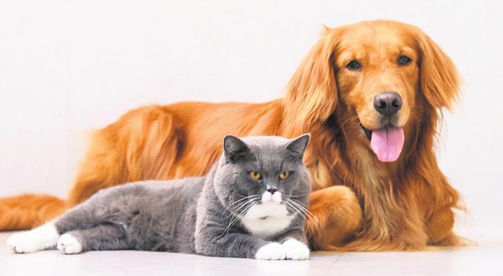 Wir warten! Katzen und Hunde benötigen auch dann Betreuung, wenn der Besitzer krank, verhindert oder auf Reisen ist.Foto: Fotolia