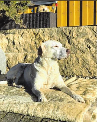 Haushund Leni genießt das Sonnenbad auf der Terrasse.