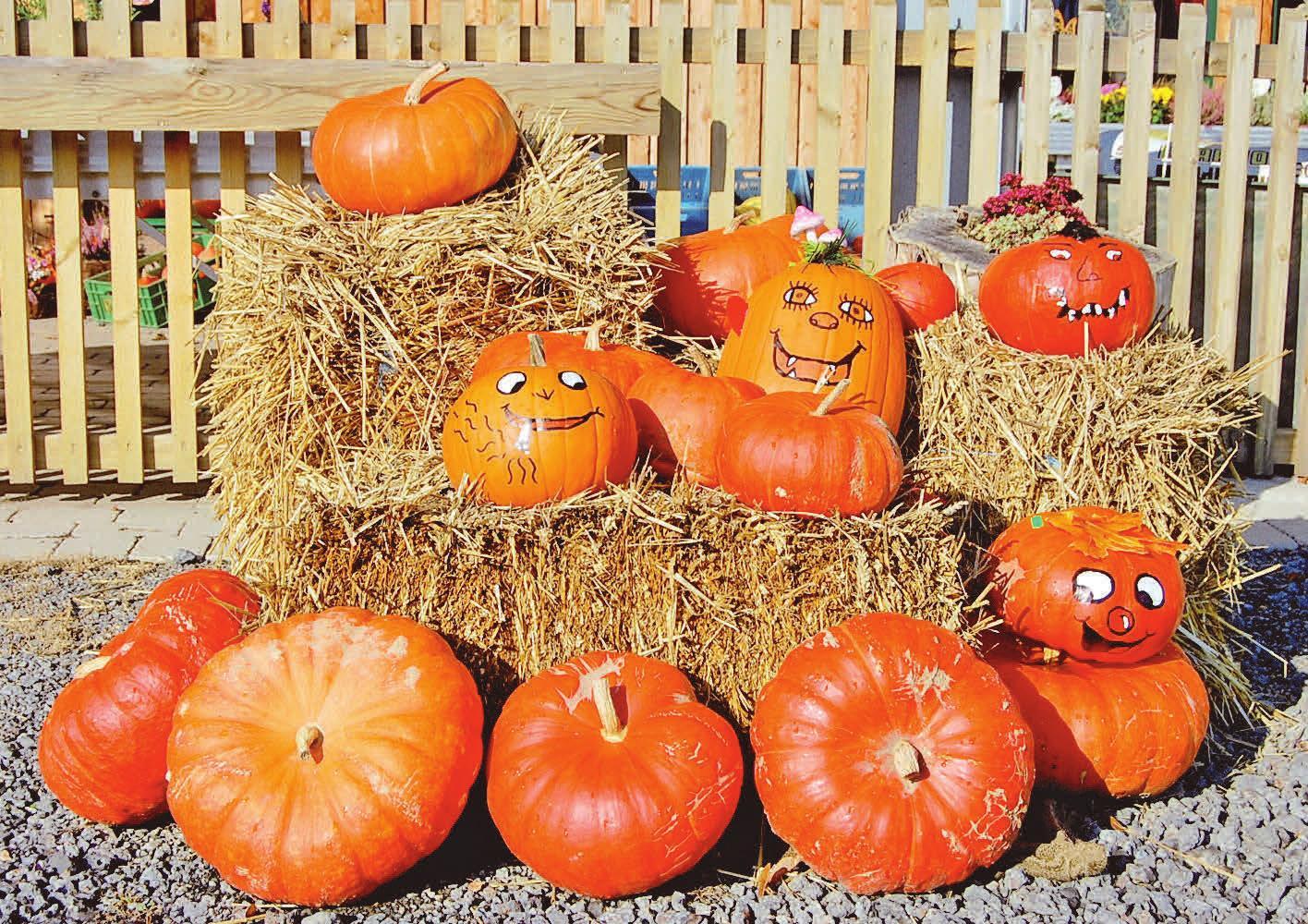 Der Herbst ist da – auch beim heutigen Tag der Küche bei IMW. Foto: Nicole Laskowski