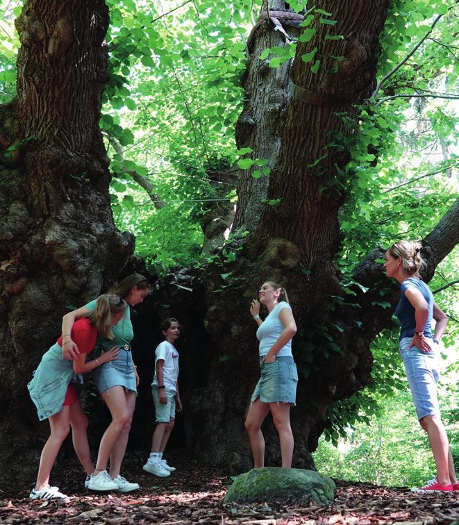Besuch an der 1000-jährigen Linde in Heede. <br>Foto: Emsland Tourismus GmbH