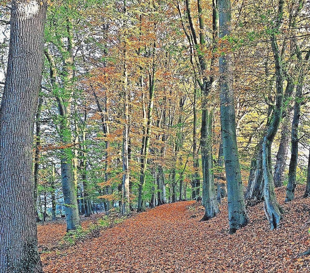 Eine Bestattung im Wald ist für viele Menschen eine Option. Foto: hfr