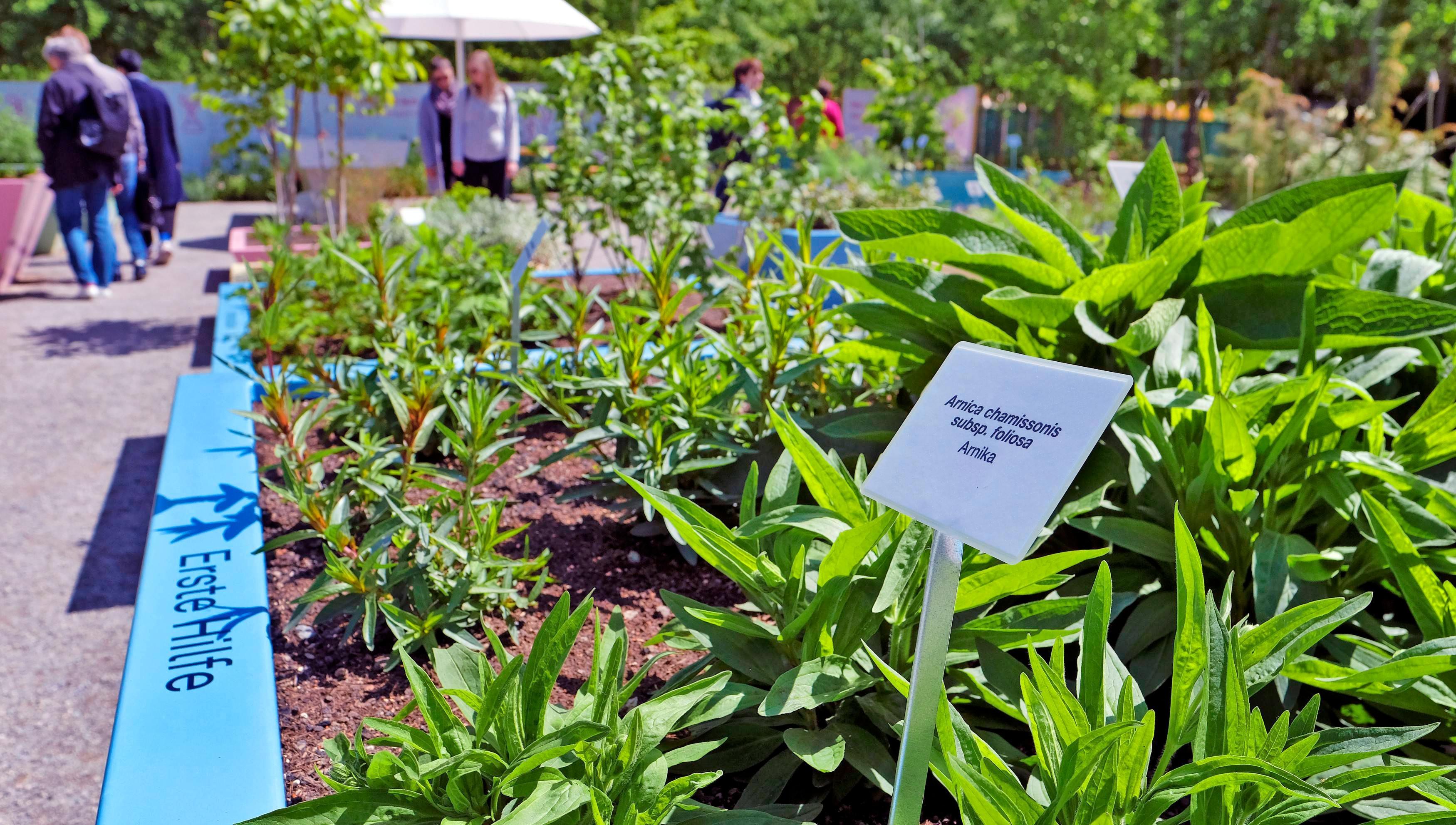 Heilgarten: Für fast jedes Wehwehchen ist auf der Buga ein Kraut gewachsen.
