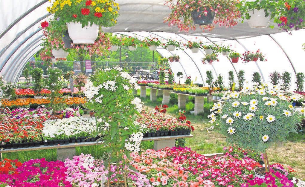 Bunte Vielfalt für den Garten: der Geranienmarkt am Handelshof.