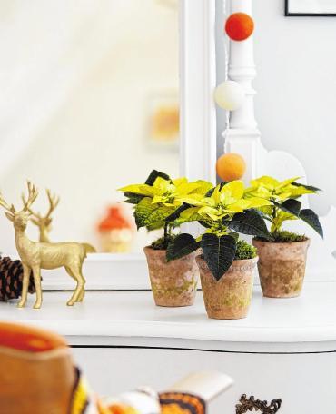 Hübsche Zimmerdeko mit Weihnachtssternen