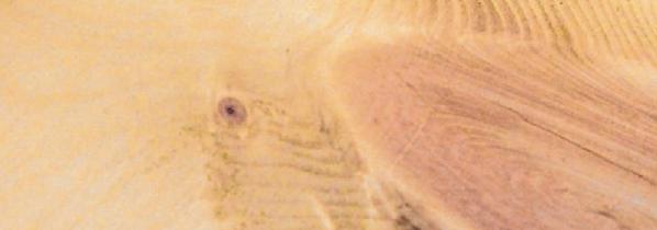 Je mehr Äste, desto intensiver wird der Duft des Holzes der Pinus Cembra sein. Foto: pin