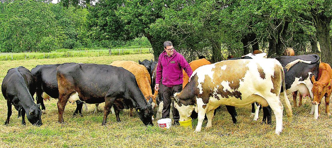 Stefan Schneider inmitten seiner Kuh- und Rinderherde, die reichlich Auslauf auf der großen Wiese genießt. FOTO: HB