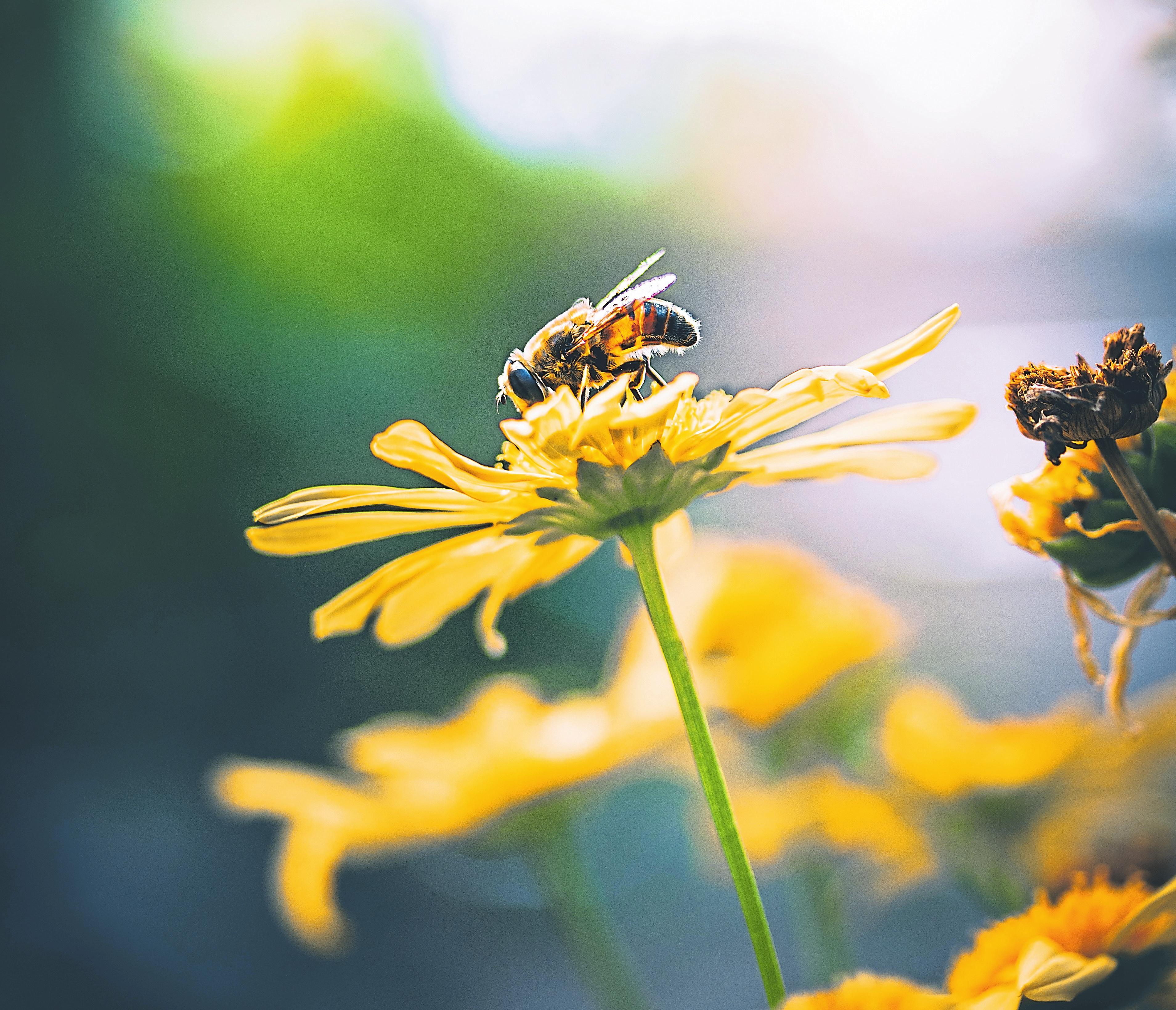 Auch wer eine Terrasse oder einen Balkon hat, kann in Töpfen, Kübeln, oder Blumenkästen bienenfreundliche Pflanzen setzen. Foto: Cactus